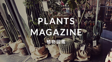 PLANTS MAGAZINE/植物図鑑
