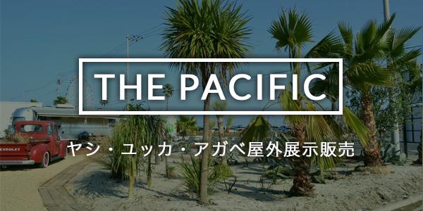 THE PACIFIC | ヤシ・ユッカ・アガベ屋外展示販売