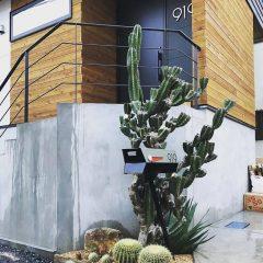 Columnar Cactus branch | in TOKYO