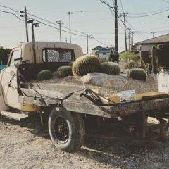 シボレートラックの上のサボテン IN CHIBA-FUTTSU